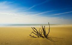 The Sand Monster (Q27a) [Explored 2018.04.21] (Darblanc ( http://darblanc.com )) Tags: artphoto beach bouchesdurhône camargue clouds colours coloursshapesandmoods daytime france landscape panorama provence salindegiraud sand sea shell stackedimages wind spring plagedepiémanson
