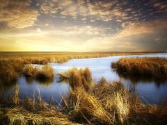 Spring thaw 2 (mrbillt6) Tags: landscape rural prairie pond waters grass sky outdoors country countryside northdakota