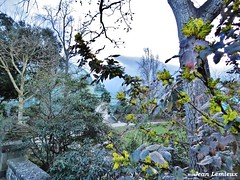 Jardin des serres d'Auteuil (JeanLemieux91) Tags: arbres árbol tree jardin garden auteuil paris îledefrance france mars march marzo hiver winter invierno 2017