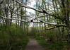 Overhang (lclower19) Tags: path tree fallen millenniumpark westroxbury massachusetts trail forest