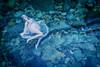 bluegreen ripple (AZURE_TB) Tags: water ripple dollfiedream dscrx1r rx1r