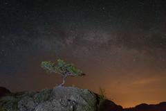 #своифото, #пейзаж, #природа, #утро, #рассвет, #дерево, #натура, #восход, #sunrise, #nature, #tree, #Landscape, #sun, #туман, #лучи, #foggy, (ЛеонидМаксименко) Tags: пейзаж восход утро лучи foggy tree nature landscape природа натура дерево sun рассвет своифото туман sunrise