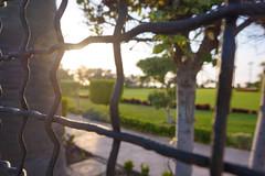 Sun through the fence (YanisMathio) Tags: sun fence garden