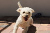 Happiest pup! (rjmiller1807) Tags: aacl capetown southafrica westerncape epping 2018 february animalanticrueltyleague animalwelfare canon canoneos70d shelter adoptdontshop adoptarescue dog pup puppy doggo whitedog adoption rescue rescuedog