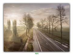 EVERY ROAD LEADS TO AN END (régisa) Tags: veurne westvlaanderen belgie belgique road route arbre tree sufjanstevens sunrise lever soleil