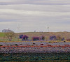 fairway (doggle) Tags: canoneos500n kodakportra400 golf windturbine clouds ryeharbour tee golfers