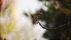 20180422-155433 - Spring Garden Bokeh - Paper Look (torstenbehrens) Tags: paper look spring garden bokeh schleswigholstein deutschland olympus epm1 m42 28200mm zhongyi objektiv turbo ii efm43 wecellent m42ef adapter