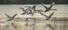 Schwäne (Cygnus) - Gruppenstart (Pana53) Tags: photographedbypana53 pana53 naturundlandschaftsfotografie naturfoto schwan höckerschwan cygnus entenvogel gefieder federn wasser see gruppe start gruppenstart massenstart tiere florafauna schwingen spiegelung wassertropfen nikon nikond500 vogel wasservogel