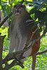 Singapore Zoo, November 12th 2008 (Southsea_Matt) Tags: canon 30d singapore zoo november 2008 autumn animal gibbon