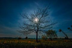 Flowers in the Dark (M-Z-Photo) Tags: colmberg bayern deutschland de langzeitbelichtung mondlicht baum wiese nachtaufnahme bäume natur