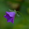 DSC_3949 (Oleg1961) Tags: tokina atx pro 100mm f28 d macro autumn flowers insects dew grass