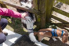 P1250226_edit (The Oldhams) Tags: cornwall donkeys flickadonkeysanctuary