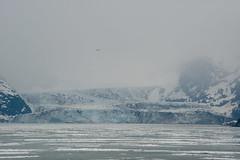 MS Westerdam - 7 Day Alaska May 2018 - Glacier Bay-301.jpg (Cindy Andrie) Tags: alaska hollandamerica d800 nature britishcolumbia beach victoriabc westerdam glacierbay landscape nikon cindyandrie canada andrie glaciers nikond800 cindy
