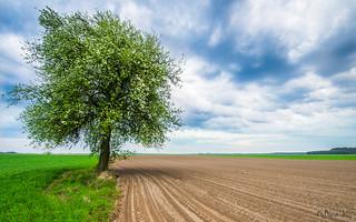 Lonely tree #2