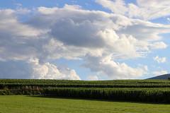 Vacances_0474 (Joanbrebo) Tags: eguisheim grandest francia fr alsace hautrhin canoneos80d eosd efs1855mmf3556isstm autofocus nubes nuvols nuages clouds nature naturaleza natura landscape paisaje paisatge