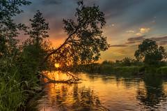Impending destiny (piotrekfil) Tags: nature landscape sunset sun river water cloud reflections sky spring tree pentax poland piotrfil