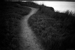 wetlands path 2014  #847 (lynnb's snaps) Tags: d76 hp5 xa film ilfordhp5 kodakd76 olympusxa rangefinder sydney australia wetlands coastal path track water lake sunset moody peaceful scurve blackandwhite bw bianconegro bianconero blackwhite biancoenero blancoynegro monochrome noiretblanc schwarzweis ishootfilm 2014 ©copyrightlynnburdekinallrightsreserved