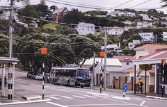 Seatoun - Dundas Street (andrewsurgenor) Tags: transit transport publictransport nzbus gowellington electric trackless trolleybus trolleybuses wellington nz streetscenes bus buses omnibus yellow obus busse citytransport city urban newzealand