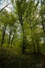 Quelque part sur la terre ! (Denis-et-Alain-nature) Tags: paysage lanscape forêt forest arbres chemin nikond810 sigma1020mmex f35 naturephotography photographie hautsdefrance pasdecalais photographenature reflex62 deniscoeurreflex62