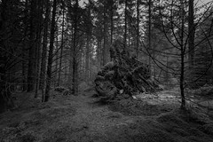 Shadow Of The Colossus (Rob Pitt) Tags: betwsycoed dark forest tree roots blackwhite monster haunted clwyd wales north canon 750d 1018mm