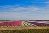 colors (patrick Thiaudiere, thanks for 1,5 million views) Tags: couleur color fleur flower blumen field champ