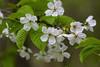 Blossoms. (ost_jean) Tags: blossoms bloesems bloemen fleurs flowers nature nikon d5300 tamron sp 90mm f28 di v ostjean