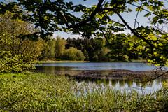 Portavoe lake (Dogs House) Tags: codown green groomsport ireland lake lough nature nikon nikond500 northernireland portavoe sigma1450mmart sigma50mmf14dghsmart water