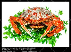 Spider Crab (__Viledevil__) Tags: animal leg crab marine life prepared crustacean shellfish sea spider aquatic arthropod boiled claw cooked cooking dinner fish food gastronomy nature red seafood shell wildlife animalleg crableg marinelife preparedcrab preparedcrustacean preparedshellfish seaspider spidercrab