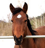 Fox (bethcook333) Tags: horse fiilly brood mare ranchlife winter canada