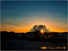 Capvespre amb iPhone (IN EXPLORE, APRIL 2018) (domenec_bm) Tags: móralanova catalunya arbre tree sunset capvespre posta sol cel sky cooperativa lledoner lawnmower