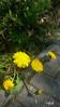 Schönheit am Wegesrand (gabimartina) Tags: frühling blüten blumen brandenburg farbe spring