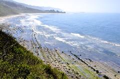 Sweeping View (hecticskeptic) Tags: carpinteria california seals pelicans rinconbeach bluff birds markamorgan