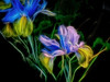 Ye stars! which are the poetry of heaven! ..Lord Byron (Nick Kenrick..) Tags: iris