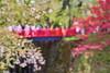 DSC05424ex(1) (shimenin) Tags: 弘前 青森 日本 japan 桜