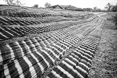 jemur kain (kuuan) Tags: indonesia voigtländerheliarf4515mm manualfocus mf voigtländer15mm aspherical f4515mm superwideheliar apsc sonynex5n solo surakarta street java bw pattern repeatingpattern bekonang jemurkain