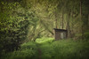 Hidden (aveyardphotography) Tags: gamekeeper hideaway overgrown shed thicket mono trees bushes dark moody nature hidden derelict colour color greenery landscape