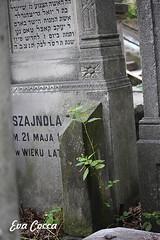 Vida entre la muerte (Eva Cocca) Tags: cementerio judío cementery jewish varsovia warsaw