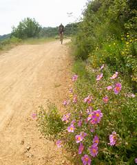 Aquinas Trail (Tom Holub) Tags: aquaniastrail losgatos unicycle