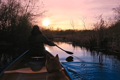 Back on Trillium Pond (deanspic) Tags: trilliumpond paddle paddling canoe canoeing sunset sky sundog misha dog filter byfilter spring paddleon g3x guindonpark catdog explore
