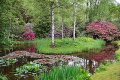 Seleger Moor (markus_kaeppeli) Tags: wald forest pond teich green grün