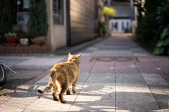 猫 (fumi*23) Tags: ilce7rm3 sony 55mm sonnartfe55mmf18za sel55f18z cat chat katze neko a7r3 miyazaki animal zeiss street alley ねこ 猫 宮崎 路地 ソニー