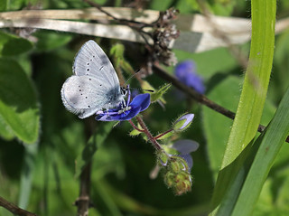 SMALL BLUE 2 180518