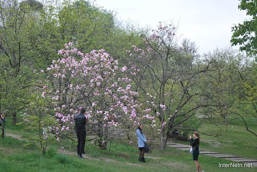 Ботанічний сад імені Гришка Цвітуть магнолії InterNetri  Ukraine 197