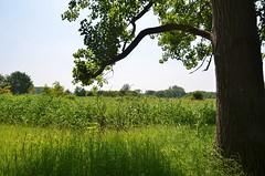 Broekpolder Vlaardingen (Hugo Sluimer) Tags: broekpolder vlaardingen zuidholland holland nederland natuur nature natuurfotografie natuurfotograaf naturephotography natuurinbloei