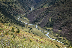 River between Lingshi and Chebisa - Thimphu District - Snowman Trek - Bhutan (PascalBo) Tags: nikon d500 asie asia southasia asiedusud drukyul drukgyalkhap bhutan bhoutan འབྲུག་ཡུལ། འབྲུག་རྒྱལ་ཁབ་ snowman trek trekking hike hiking lunana thimphu himalaya himalayas jigmedorjinationalpark landscape paysage river rivière montagne mountain outdoor outdoors pascalboegli