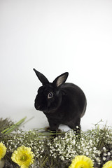 Cruelty Free (rileyjamesphoto) Tags: cruelty free bunny rabbit bunnies flowers