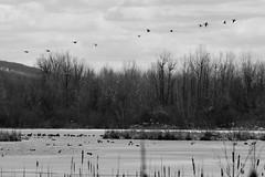 beautiful nature-1 (tevfikyildiz) Tags: bird oiseau landscape montagne mountain nature neige paysage snow vosgessky serene panaromas river water lac