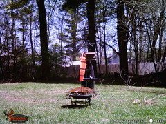 WGI_3208 (scottmcon) Tags: mama bear birdfeeder takedown may 2 2018 mother two cubs solor last years august yearling april 27 separate days