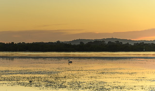 Sunrise Waterscape - Pretty in Pastels with Pelican