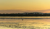 Sunrise Waterscape - Pretty in Pastels with Pelican (Merrillie) Tags: daybreak woywoy landscape soft nature australia pelican foreshore newsouthwales earlymorning nsw brisbanewater bird wildlife pastels morning dawn coastal water sky waterscape sunrise centralcoast bay outdoors